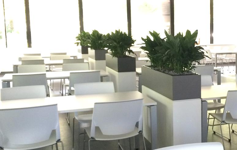 Pflanzen Möbeleinbauten oder Sideboards, akzente raumbegrünung