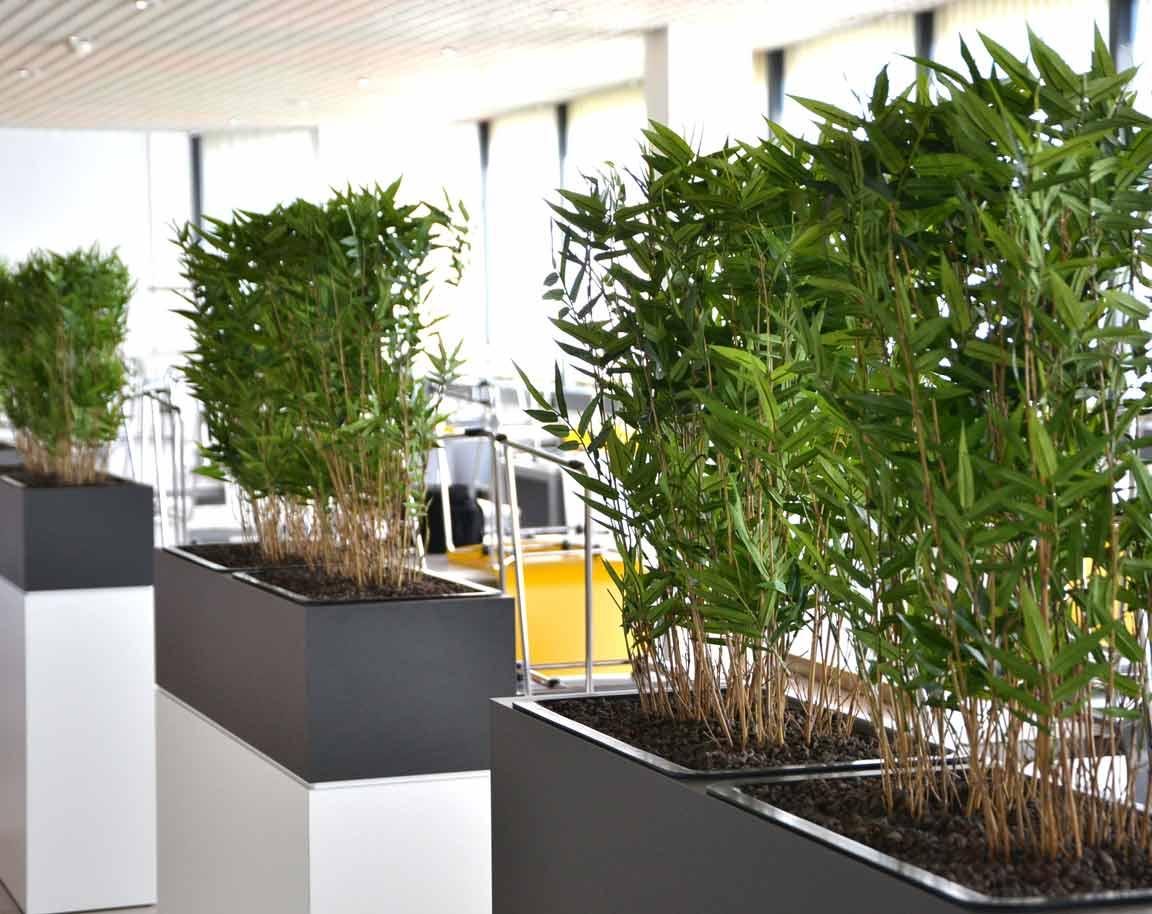 Textilpflanzen in Raumtrennern strukturieren die Sitzbereiche in der Kantine