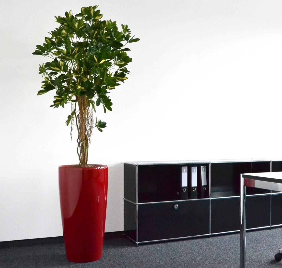 Büroeinrichtung mit Kunstpflanzen, akzente raumbegrünung