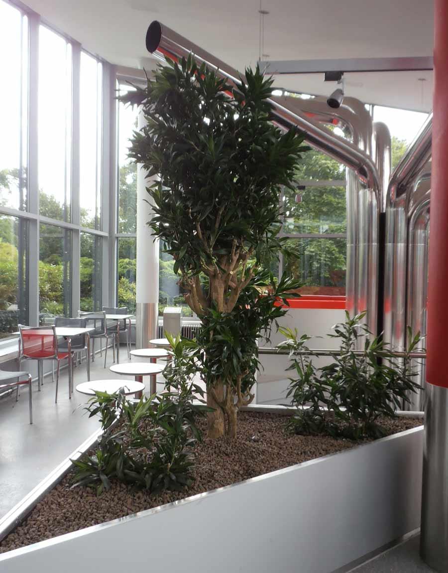 Begrünung einer Kantine mit Zimmerpflanzen in einem Pflanzbecken.
