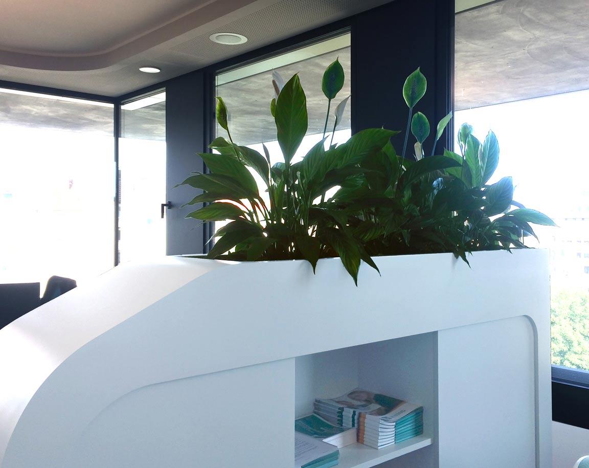 Bepflanzte Sideboards sorgen für eine lockere Aufteilung der Arbeitsplätze