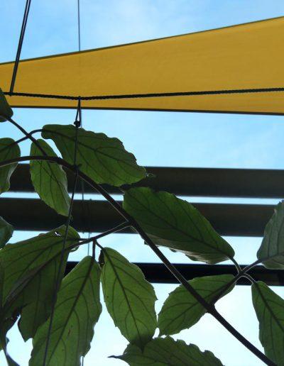 Pflanzen In Fassade Essen NRW Pflanzen Im Urbanen Raum