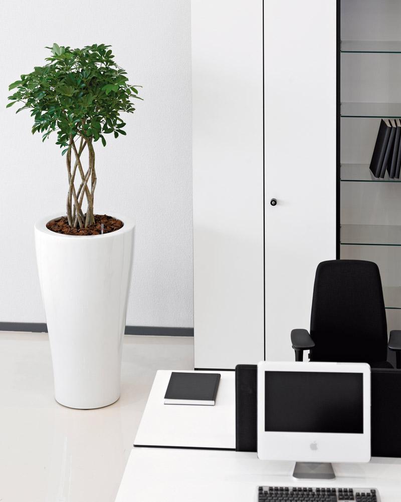 Begrünung am Arbeitsplatz mit modernen Pflanzkübeln