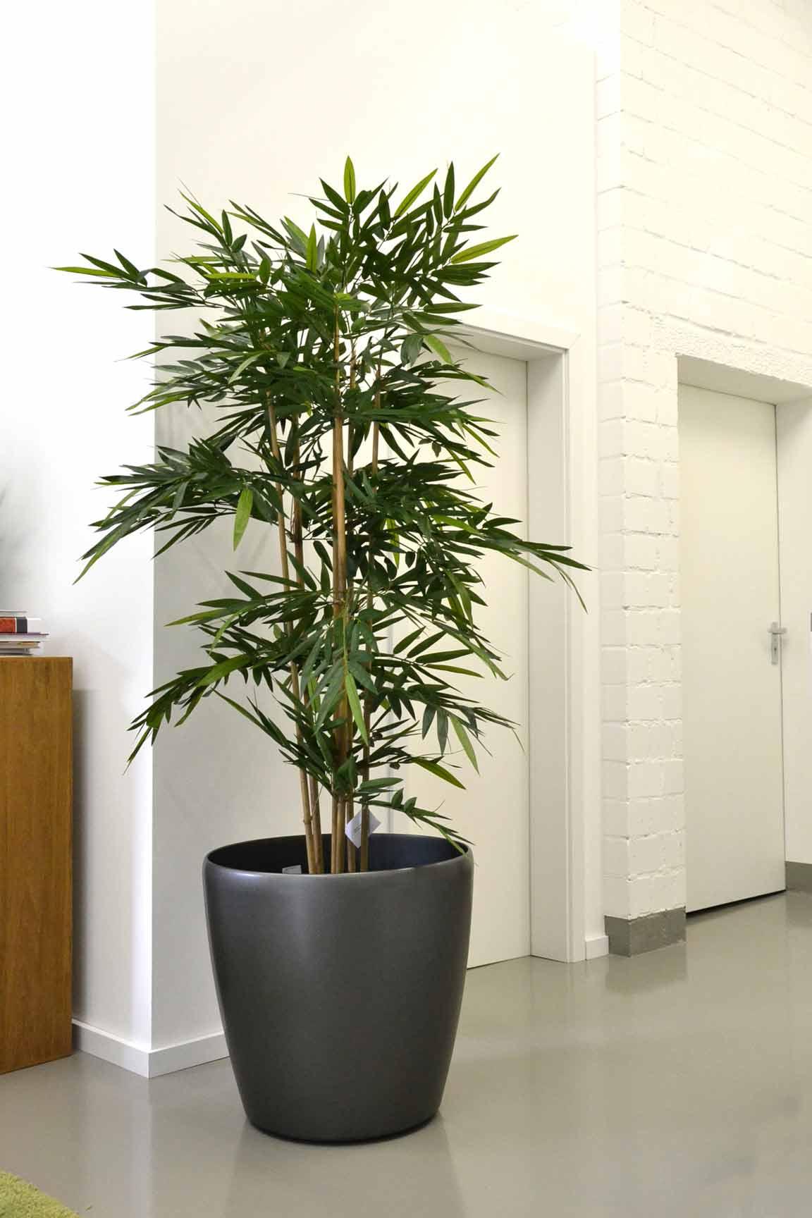 textilpflanzen akzente raumbegr nung