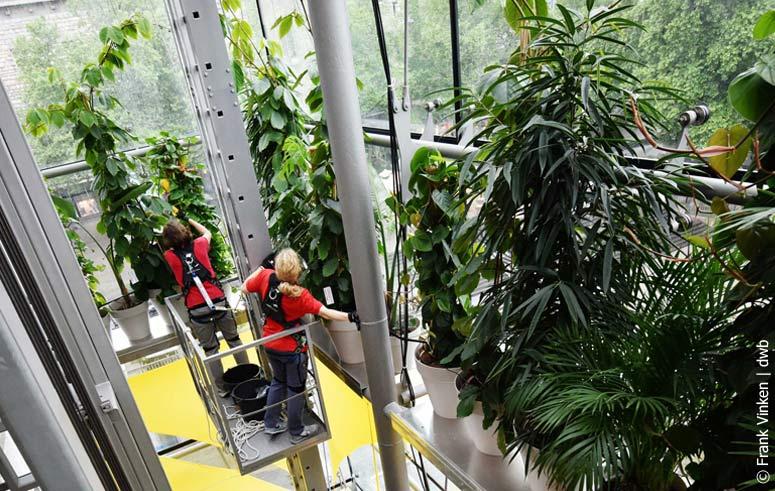 Pflanzenpflege, akzente raumbegruenung