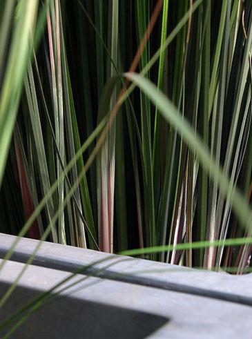 Textilpflanze, akzente raumbegrünung