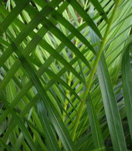 Pflanzen als grüne Klimaanlage im Büro.
