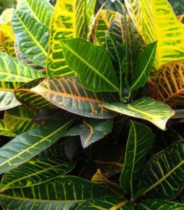 Farbigen Blätter in vertikalen Pflanzenwänden
