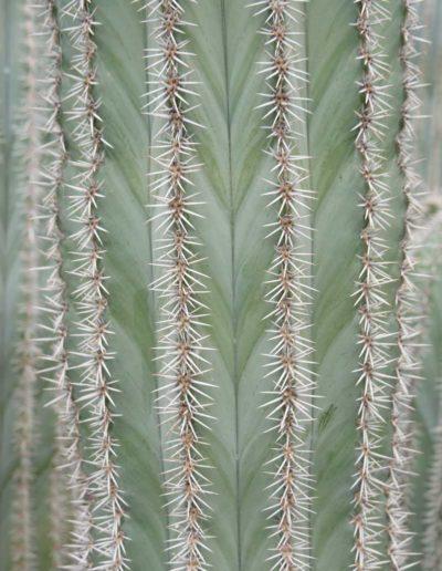 Pflanzen und Gefäße in Büros