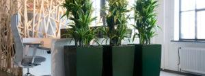 Pflanzgefäße für Hydrokulturpflanzen im Büro.