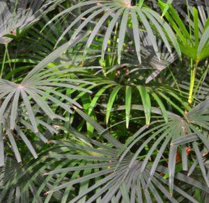 Pflanzen erhöhen die Luftfeuchtigkeit