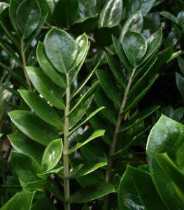 Pflanzen am Arbeitsplatz