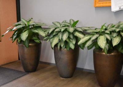 Keramikgefaesse Hydrokultur Bueropflanzen Innenraumbegruenung