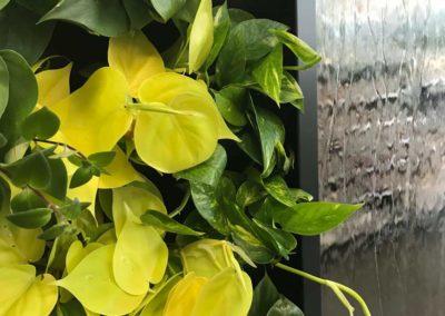 Raumteiler Pflanzenwand WorkingGreen Akzente Raumbegruenung