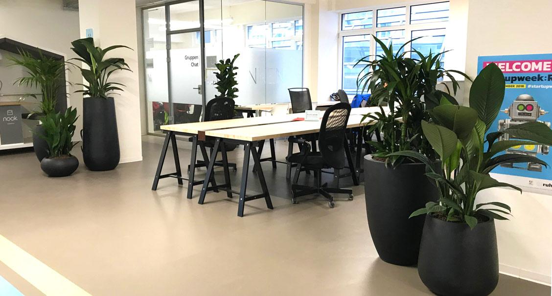 Coworking Arbeitsbereich, PFlanzen am Arbeitsplatz, akzente raumbegruenung