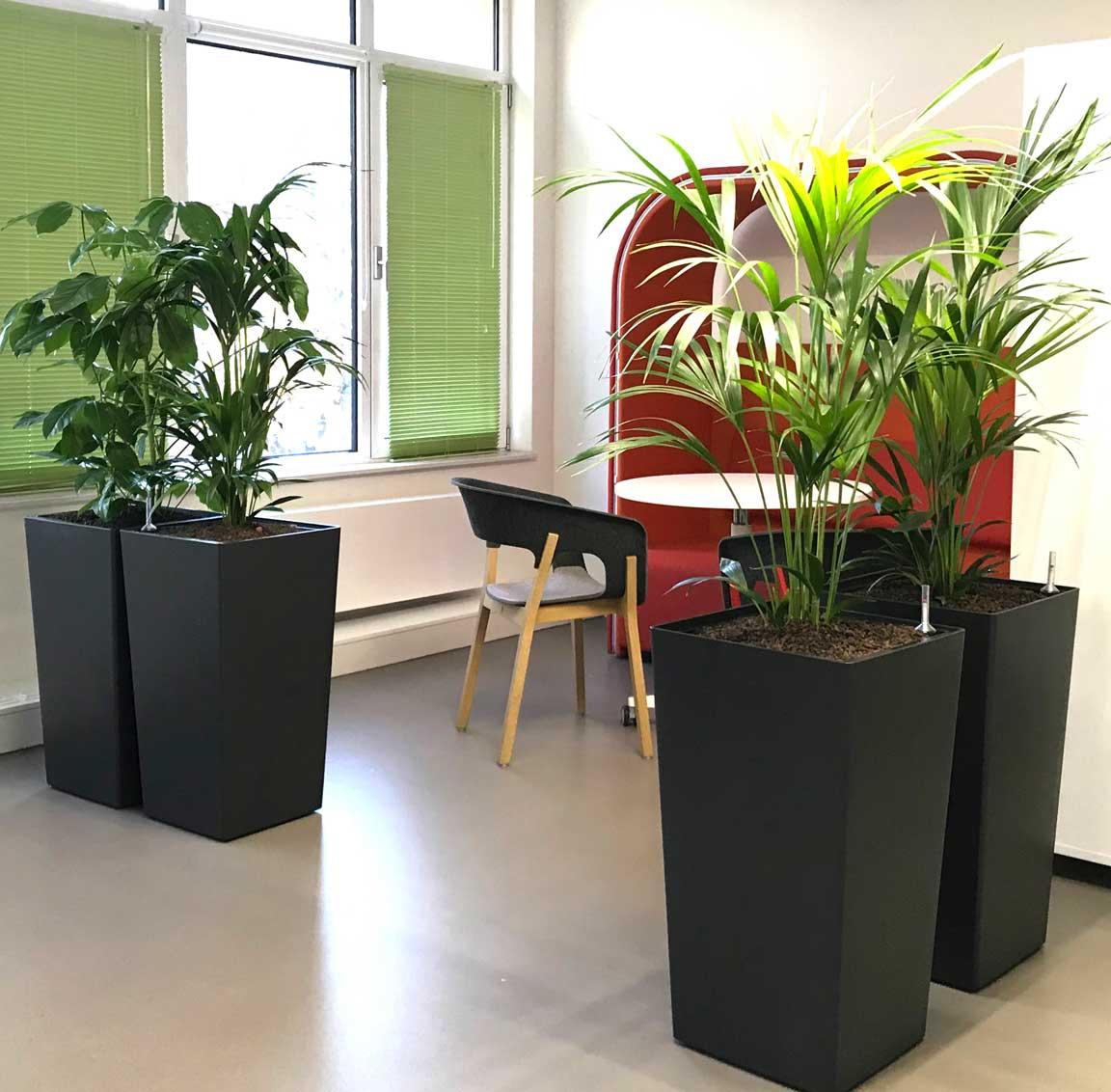 Pflanzen am Arbeitsplatz, mobile Gefäße, akzente raumbegrünung