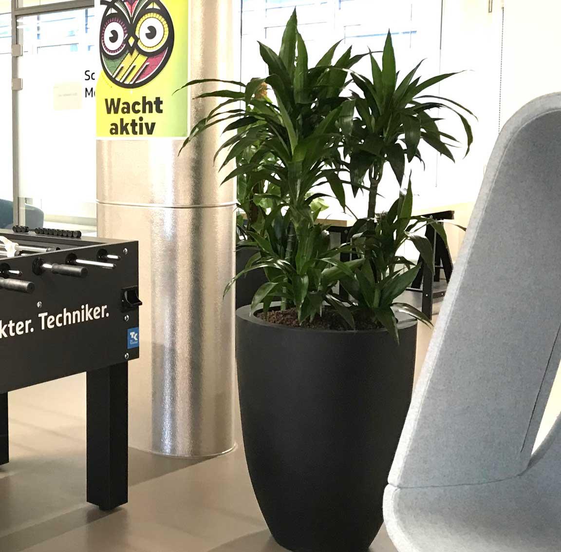 Pflanzen am Arbeitsplatz, Coworking, akzente raumbegrünung