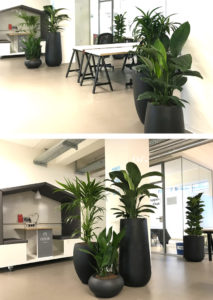 Pflanzen Coworking Space Officehub