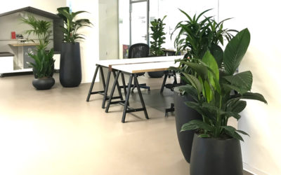 Grüne Oasen im Büro
