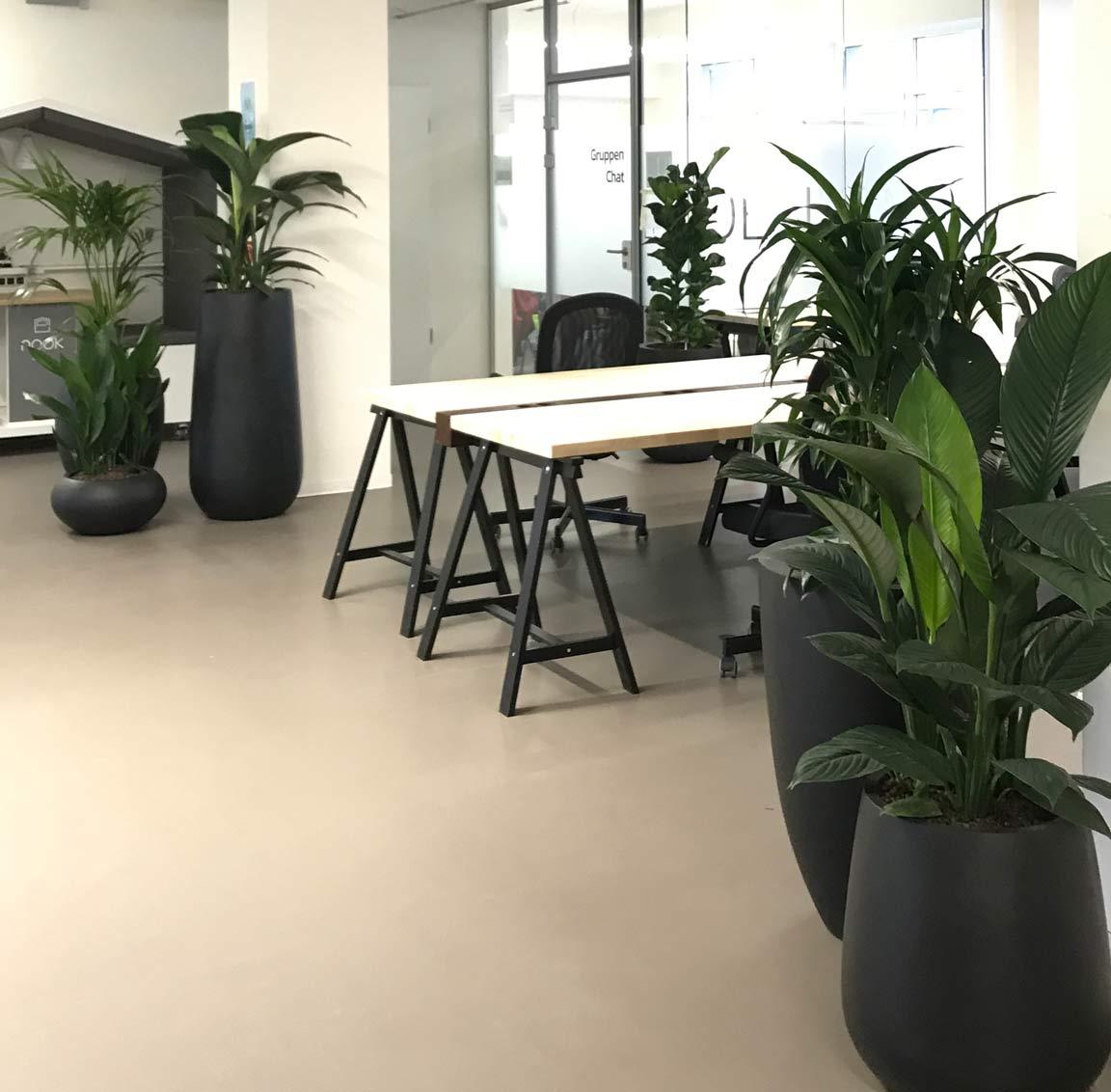 Arbeitswelt mit PFlanzen, Openspace, akzente raumbegrünung