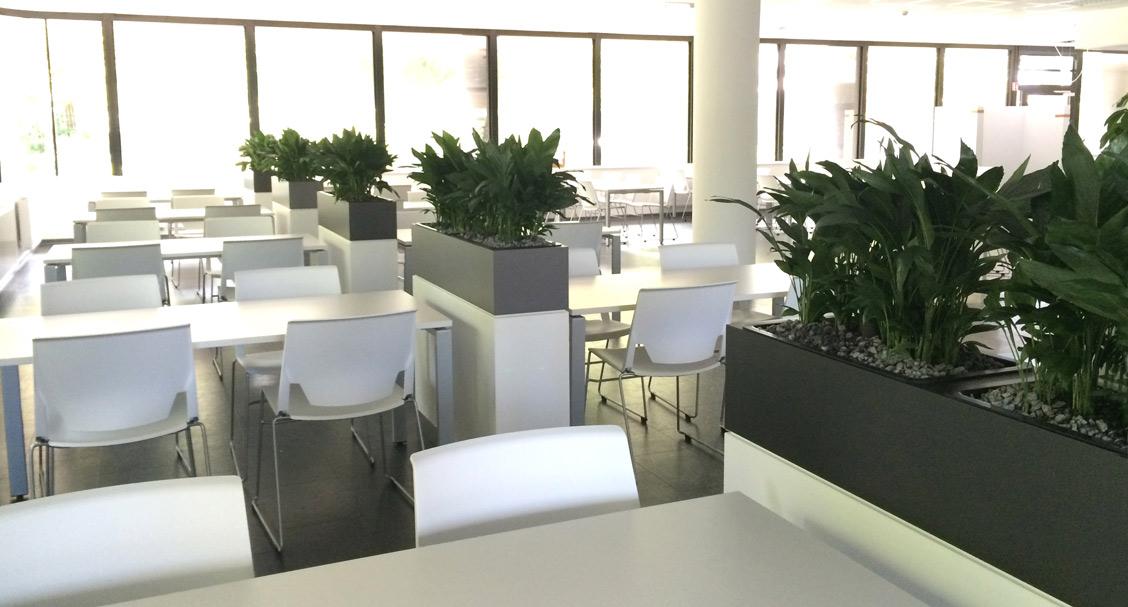 Kantine, Mensa, bepflanzte Raumteiler, akzente raumbegrünung