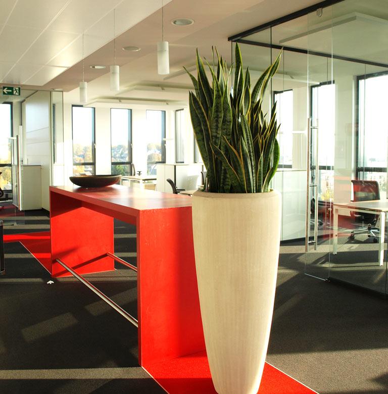 Begruenung Openspace-Büro Meetingpoint, akzente raumbegrünung