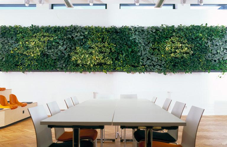 Objektbegrünung, Ficus Stamm, akzente raumbegrünung