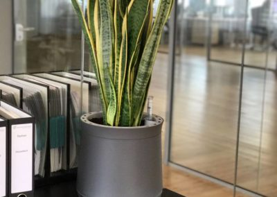 Produktive Pflanzen auf dem Sideboard