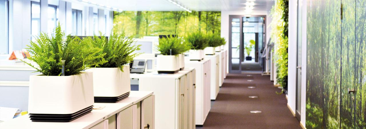 Verbesserung der Büroluft akzente raumbegrünung