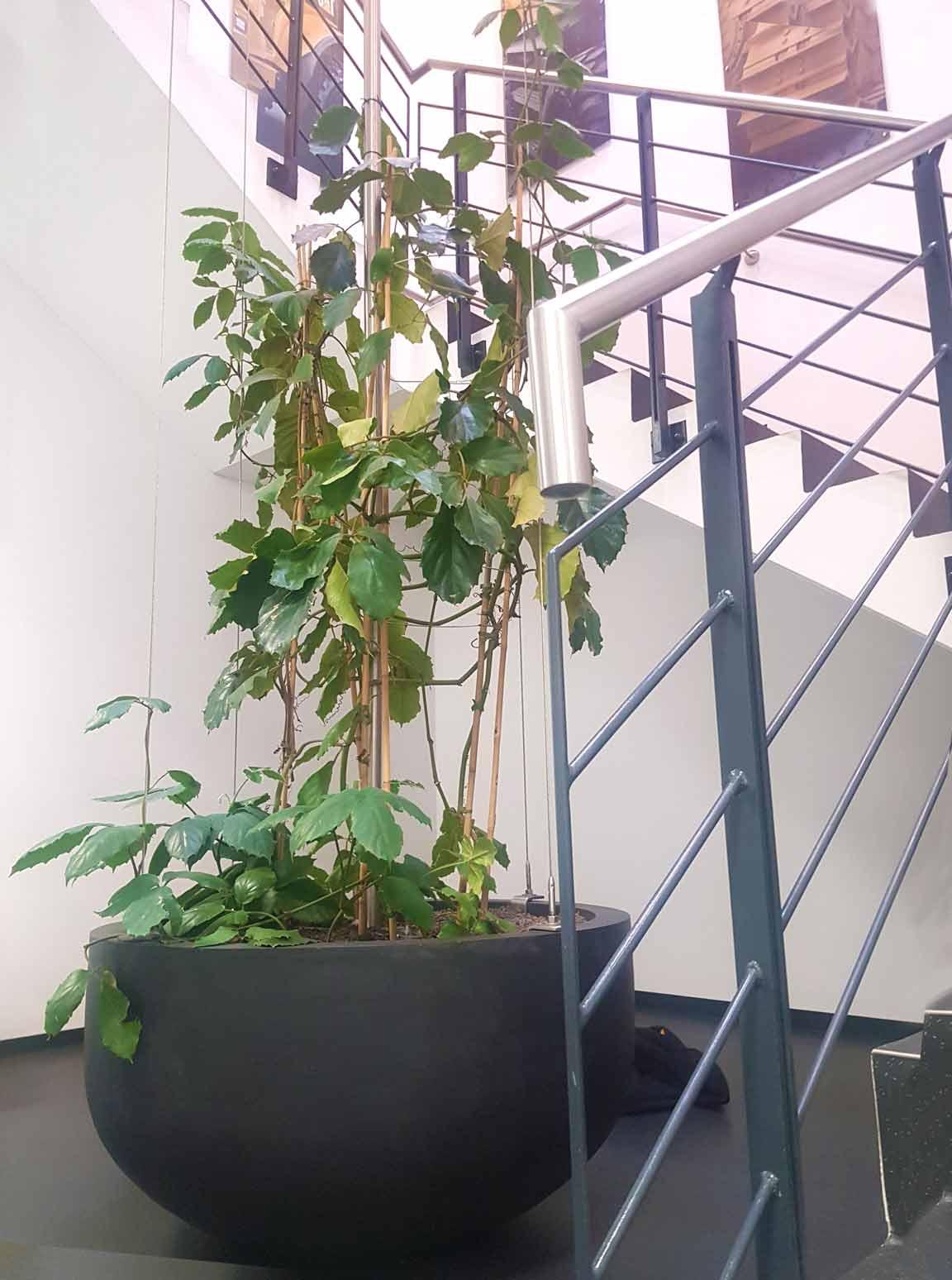 Bürobegrünung Raumtrennersystem Philodendron, akzente raumbegrünunh