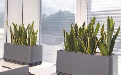 Gesunde Büroluft | AIRY-Biofilter