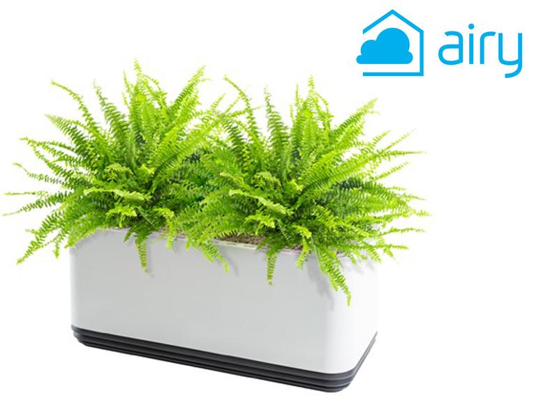 Luftreinigende Pflanzen im Airy Blumentopf