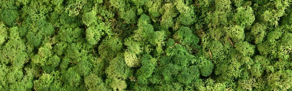 Kugelmoos Raumakustik Grüne Wand, akzente raumbegrünung