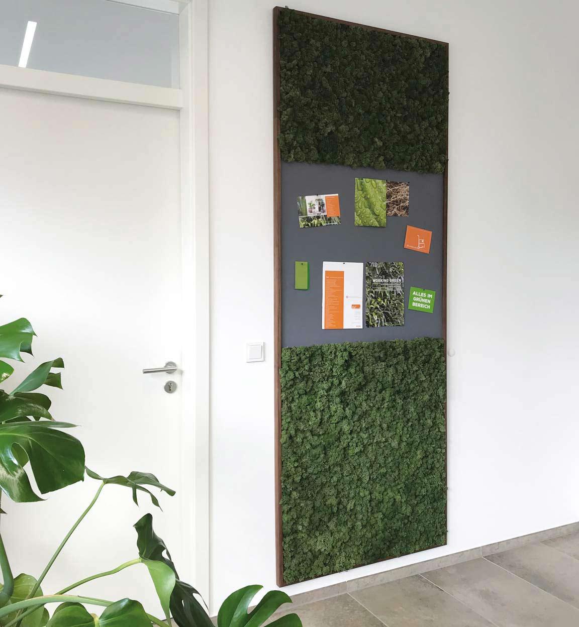 Islandmoos Raumakustik Grüne Wand, akzente raumbegrünung