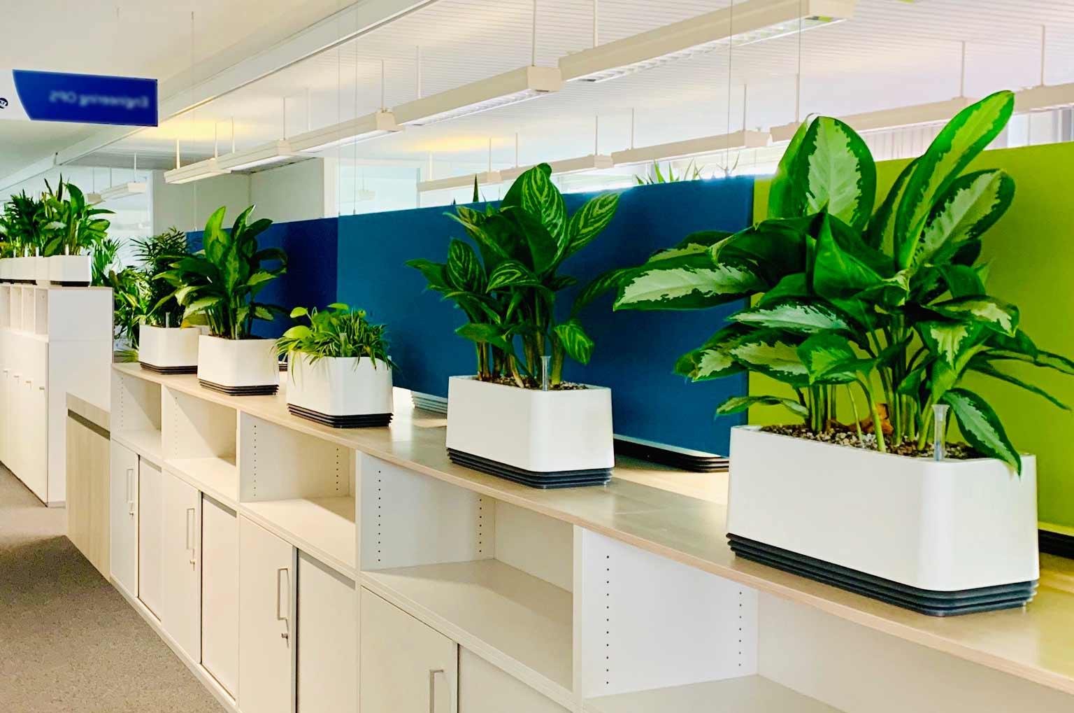Saubere Luft im Büro. Airy Biofilter und Pflanzen