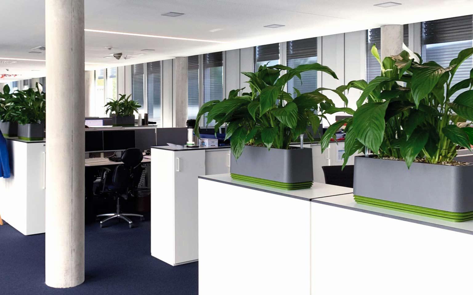 Begrünung für eine gesunde Büroluft
