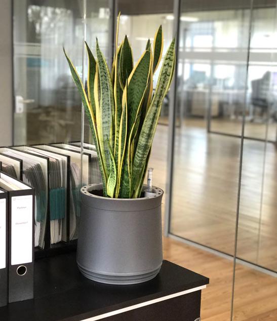 Pflanzen werten Büroräume auf