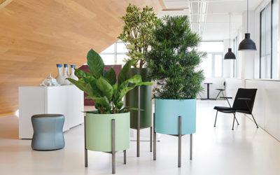 Büropflanzen mal anders positioniert.