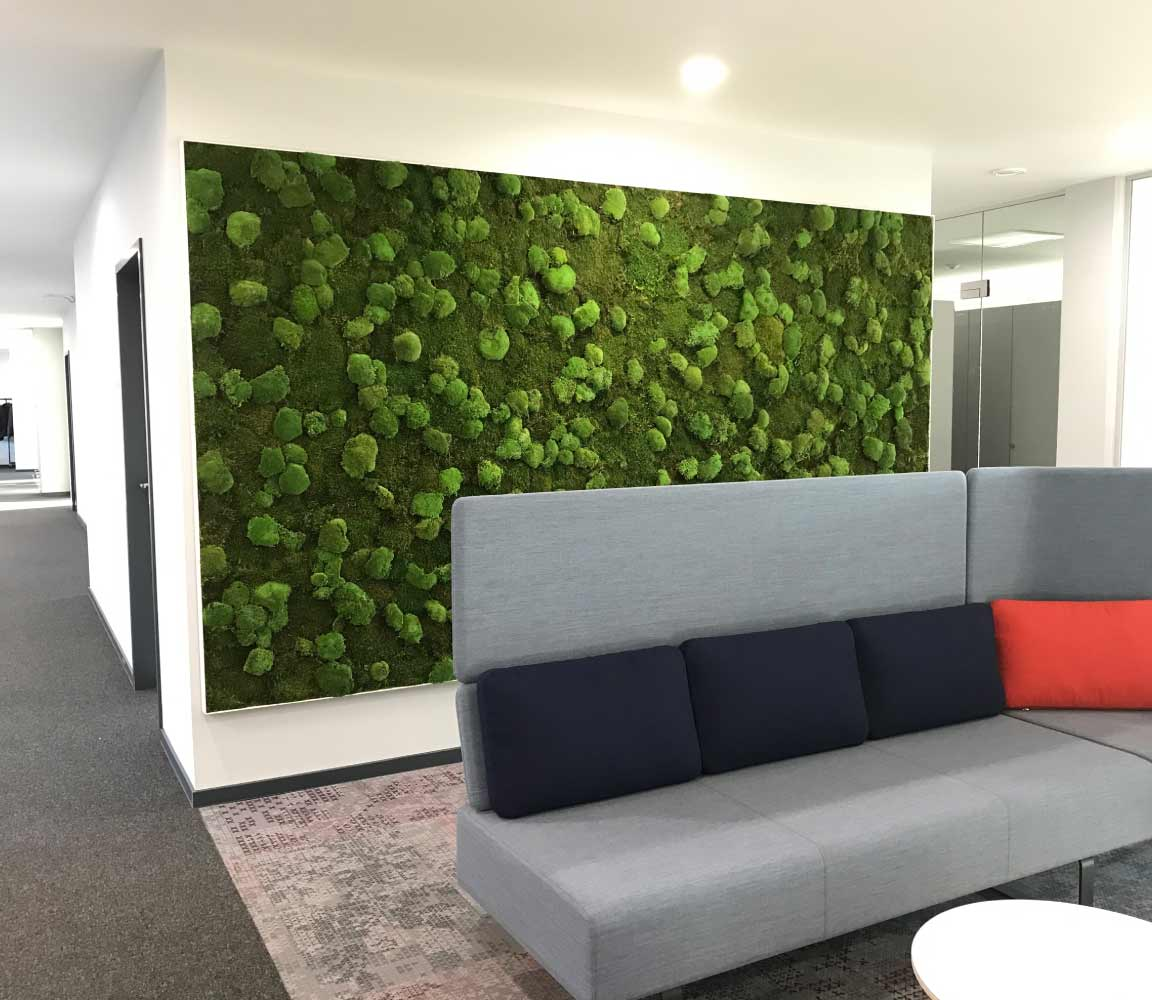 Akustiktrennsystem Islandmoos Pflanzenwand, akzente raumbegrünung