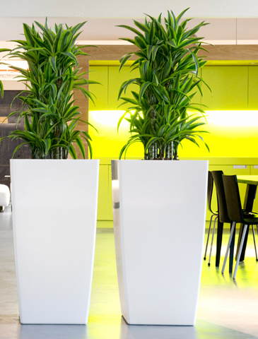 Grüne Raumtrenner Meetingbereich