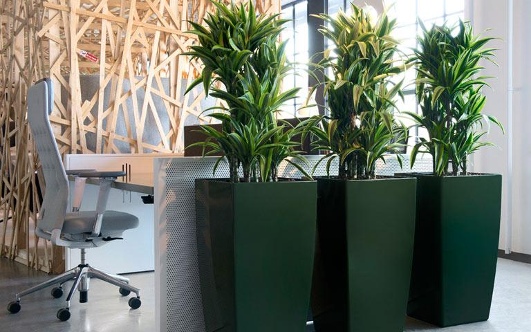 Grüne Raumtrenner Arbeitsplatz