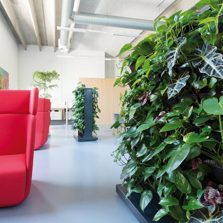 Raumteiler Pflanzen