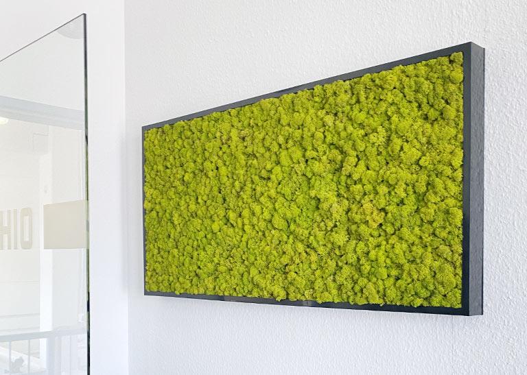 Verbesserung Raumklima im Büro durch Pflanzen, akzente raumbegruenung