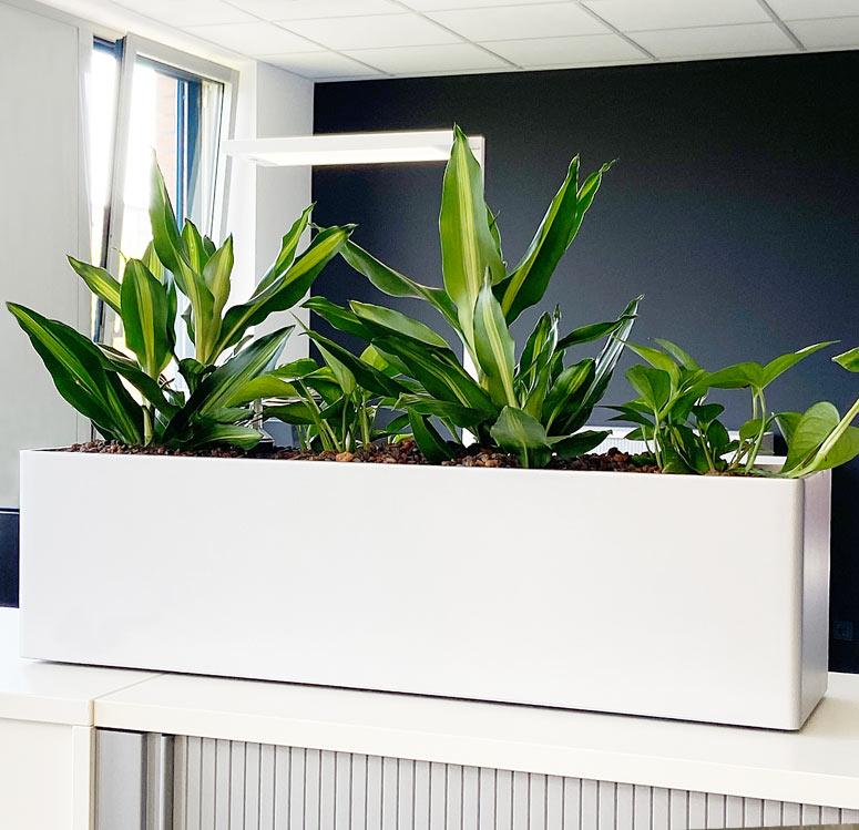 Pflanzen verbessern das Raumklima im Büro